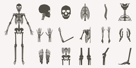 Human bones orthopedic and skeleton silhouette collection set on white background, bone x-ray image of human joints, anatomy skeleton flat design vector illustration. Illustration