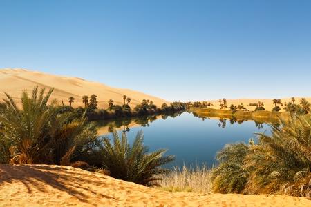 palm desert: Umm al-Ma lago - oasi idilliaca nel mare di sabbia Awbari, deserto del Sahara, Libia Archivio Fotografico
