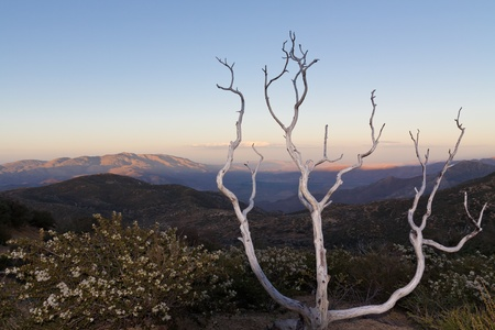 Dead tree at Anza-Borrego Desert State Park, Southern California, USA photo