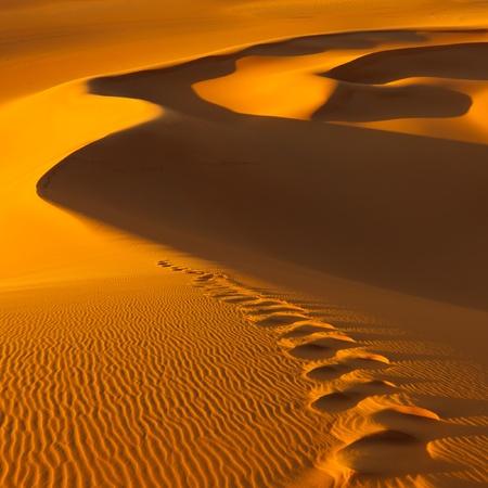 desert footprint: Footprints in the sand dunes at sunset - Murzuq Desert, Sahara, Libya