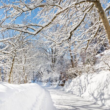 A beautiful day in winter wonderland. Snowcapped trees over snowy country road. photo