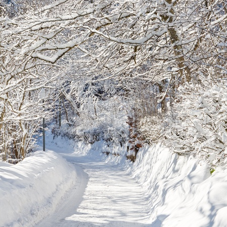 A beautiful day in winter wonderland. Snowcapped trees over snowy country road. Stock Photo - 9828335