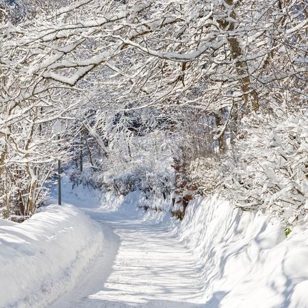 Une belle journ�e, in winter wonderland. Arbres enneig�s sur route enneig�e. Banque d'images