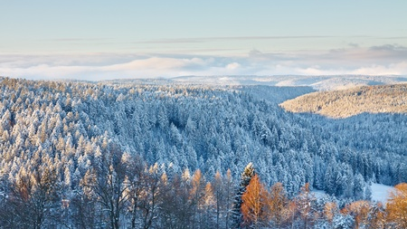 Magical Winter Landscape in the Black Forest, Germany photo