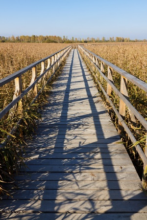 Wooden path leading through a swamp. photo