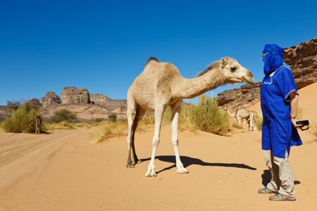 encounters: Unrecognizable tourist encounters a camel while on desert safari in the Sahara, Libya