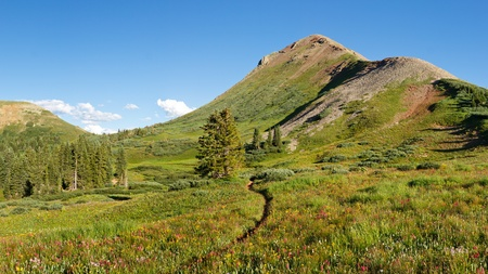 san juans: Wildflowers galore on idyllic alpine meadow in the San Juan Mountains along the Colorado Trail. Stock Photo