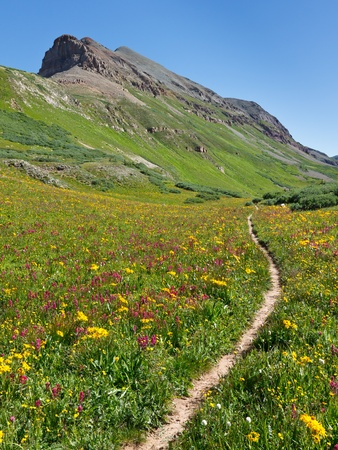 Trail leading through idyllic alpine meadow with abundant wildflowers in the Rocky Mountains, Colorado.