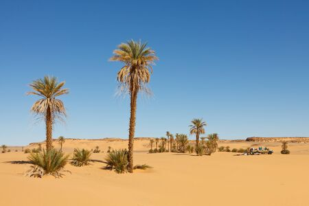 oasis: A truck in the Sahara Desert surrounded by palm trees. Stock Photo