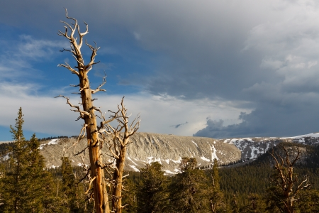 Dead Pine Tree at Sunset and Storm Clouds in the Distance in the Sierra Nevada, California, USA photo