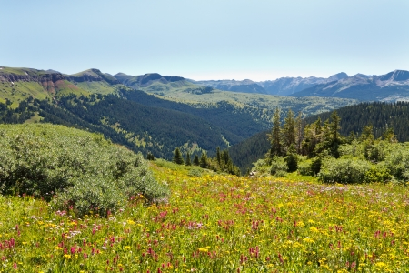 san juans: Wildflowers in abundance on alpine meadow along the Colorado Trail in the Rocky Mountains. Stock Photo