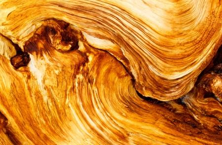 pct: Beautiful Wood Grain of Dead Pine Tree in the Sierra Nevada, California, USA. Stock Photo