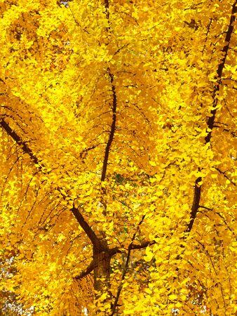 Intense Autumn Colors - Tree with vibrant autumn colors. Stock Photo - 17313073