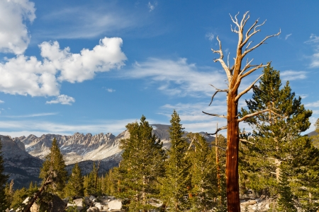 pct: Dead Tree in High Sierra Landscape, California, USA. Stock Photo