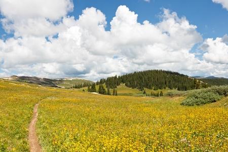 rocky mountains colorado: Trail through Meadows of Wildflowers, Rocky Mountains, Colorado