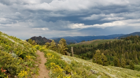 pacific crest trail: Pacific Crest Trail in Northern California, USA