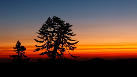 Tree Silhouetted against Sunset in Northern California, USA Stock Photo - 19580289