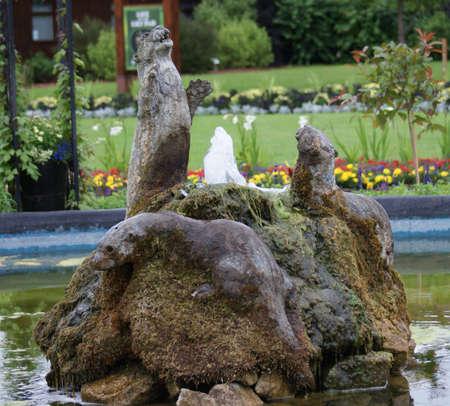 aonyx cinerea: Oriental Small-clawed Otter - Aonyx Cinerea - Water Feature