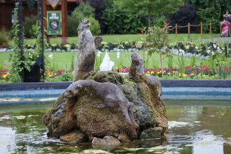 water feature: Oriental Small-clawed Otter - Aonyx Cinerea - Water Feature