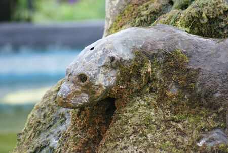 small clawed: Oriental Small-clawed Otter - Aonyx Cinerea - Water Feature