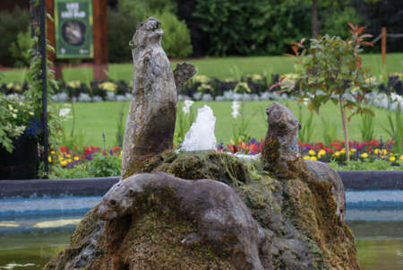aonyx: Oriental Small-clawed Otter - Aonyx Cinerea - Water Feature