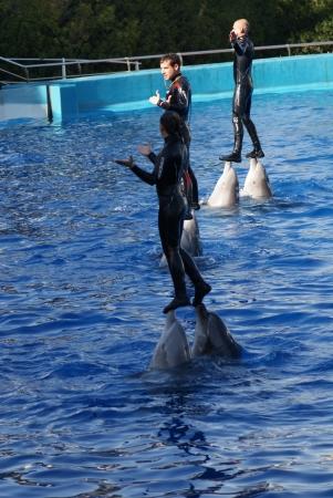 bottlenose: Common Bottlenose Dolphin - Tursiops truncatus