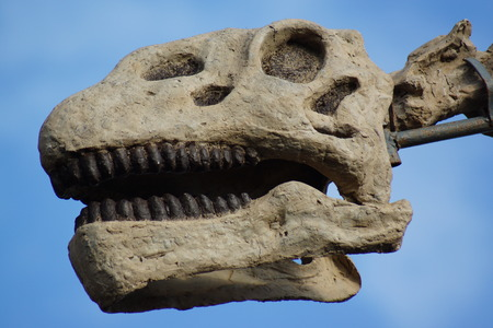 extinct: A large extinct Brachiosaurus - Brachiosaurus altithorax Editorial