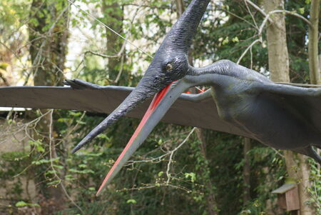 An extinct Pteranodon - Pteranodon longiceps photo