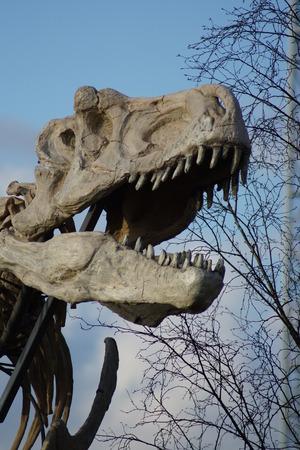 t rex: Skelet van een Tyrannosaurus Rex - T Rex
