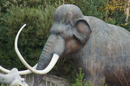 ancestor: The Elephant Ancestor - Woolly Mammoth - Mammuthus primigenius Stock Photo