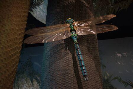 przodek: Meganeura monyi - a large extinct dragonfly bug ancestor Zdjęcie Seryjne