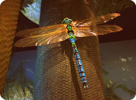 crawly: Meganeura monyi - a large extinct dragonfly bug ancestor Stock Photo