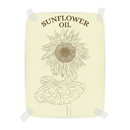 sunflower drawing: Sunflower. Vintage label Sunflower oil. Textured paper with a beautiful drawing of a sunflower. Design for label, cards, advertising, postcards. Sepia, a brown colour. Vector illustration. Illustration