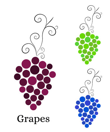 purple grapes: Vine with bunch of grapes. Logo for winery, wine store, wine menu. Round purple, green and blue grapes. Healthy eating. Vitamins for health. Vector illustration.
