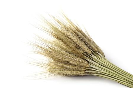 fascicle: Bundle of wheat Stock Photo