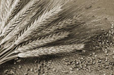 fascicle: Wheat grains and ears with rustic background Stock Photo