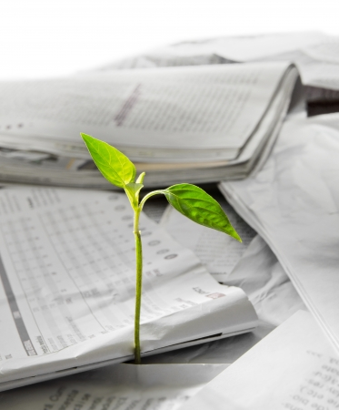 the sprout: Plant growing out of pile of newspapers