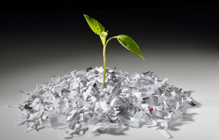 shredded paper: Plant growing from recycled shredded paper