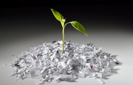 deforestacion: Planta que crece de tiras de papel reciclado Foto de archivo