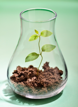 genetically modified: Growing plant in a test tube with green background