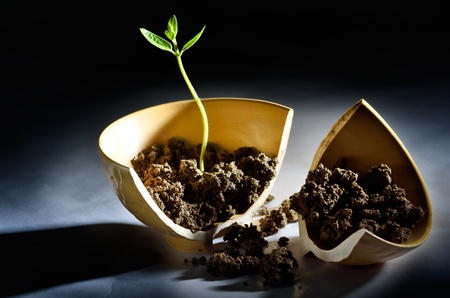 Plant growing out from cracked vase Stock Photo