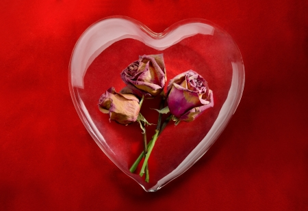 Nostalgic love  Glass heart with dried red roses inside on red background photo
