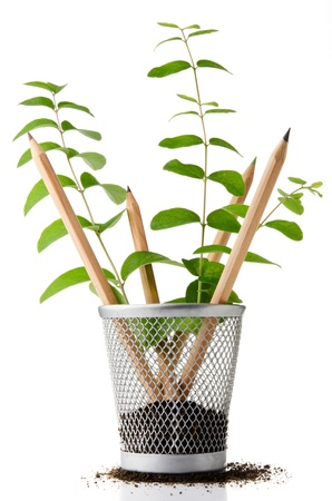 Pencil holder with pencils growing as plants