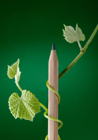 New growth sprouting from pencil Imagens