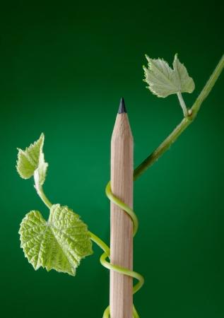 educacion ambiental: Nuevo crecimiento que brota de lápiz