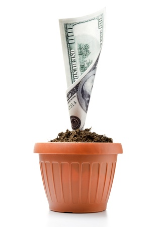 Growing money in the flowerpot