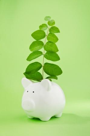 recursos financieros: Hucha con la planta que crece de símbolos ranura para las monedas de crecimiento del capital o buena inversión Foto de archivo