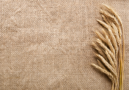 sack of flour: Wheat ears over burlap background with copy space Stock Photo