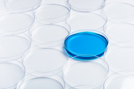 Blue cultures in petri dish among empty dishes in lab