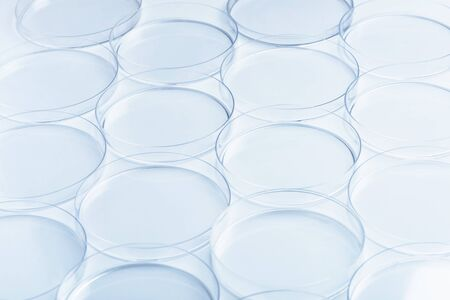 genetic information: Rows of empty petri dishes Stock Photo